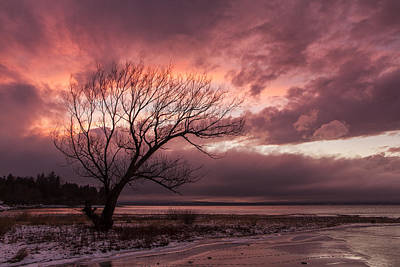 Vermont-sunset-silhouette-lake Champlain-tree Print by Andy Gimino