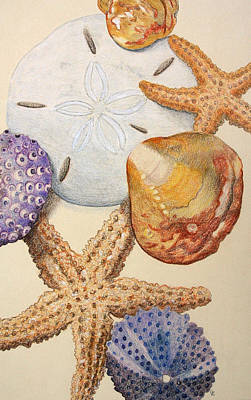 Color Pencil Drawing - Vertical Starfish by Glenda Zuckerman