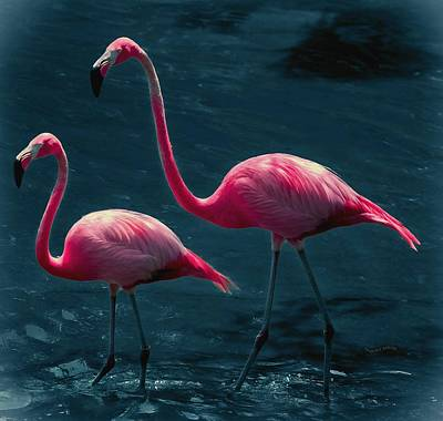 Very Pink Flamingos Print by DigiArt Diaries by Vicky B Fuller