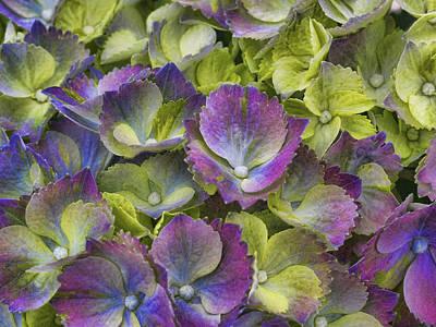 Vibrant Petals Print by Eggers   Photography