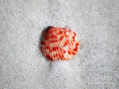 Vibrant Red Ribbed Sea Shell In Fine Wet Sand Macro Watercolor Digital Art Print by Shawn O'Brien