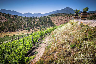 View Of The Vineyard. Winery In Casablanca, Chile. Print by Anna Soelberg