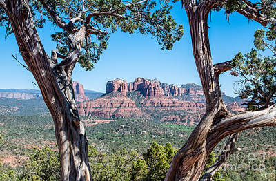Fine Art Photograph - View Of Cathedral Rock by Tod and Cynthia Grubbs