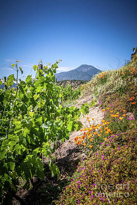 Vineyard View With Flowers, Winery In Casablanca, Chile Print by Anna Soelberg