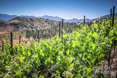 View Of The Vineyard. Winery In Chile, Casablanca Valley Print by Anna Soelberg