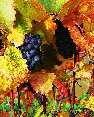 Red Photograph - Vineyard 18 by Xueling Zou