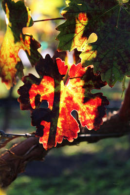 Red Photograph - Vineyard 26 by Xueling Zou