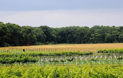 Vine Photograph - Vineyard And Pasture by Brian Manfra