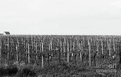 Cslanec Photograph - Vineyard by Christian Slanec