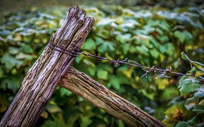 Vineyard Fence Print by Gary Fossaceca