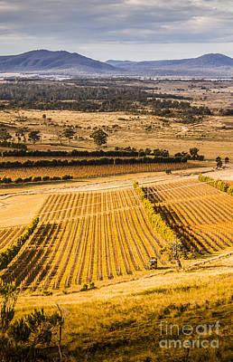 Vineyard Harvest Landscape Print by Jorgo Photography - Wall Art Gallery