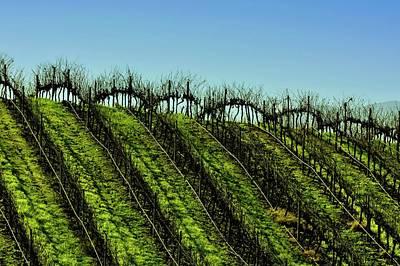 Vineyard In Autumn Print by Fernando Lopez Lago