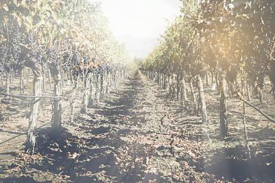 Vineyard Photograph - Vineyard In Autumn With Vintage Instagram Style Filter by Brandon Bourdages