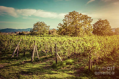 Wine Photograph - Vineyard In Tuscany, Italy. Wine Farm At Sunset. Vintage by Michal Bednarek