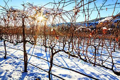 Southwest Landscape Photograph - Vineyard In Winter by Alexey Stiop