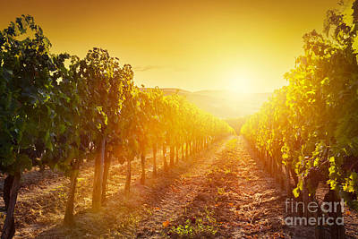 Vineyard Landscape In Tuscany Print by Michal Bednarek