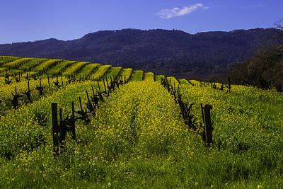 Vineyard Photograph - Vineyard Mustard by Garry Gay
