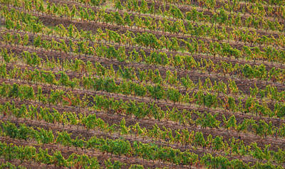 Portugal Art Painting - Vineyard Of Portugal by David Letts