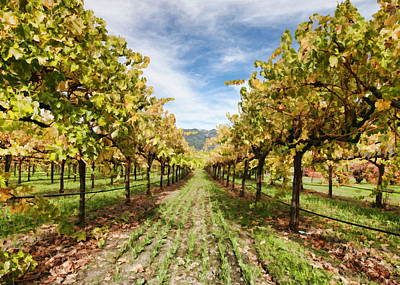 Vineyard Original by Paul Bartoszek