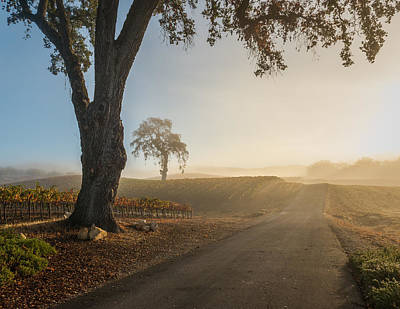 Winery Photograph - Vineyard Road by Joseph Smith