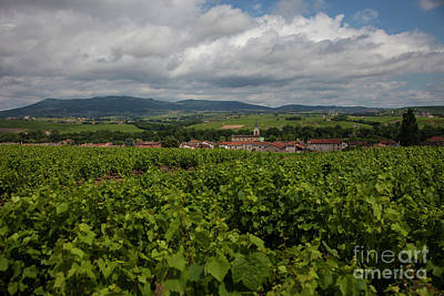 Beaujolais Photograph - Vineyard by Timothy Johnson