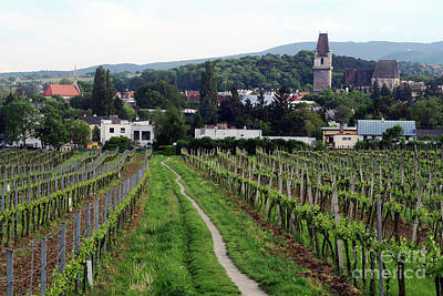 Cslanec Photograph - Vineyard Walkway - Austria by Christian Slanec