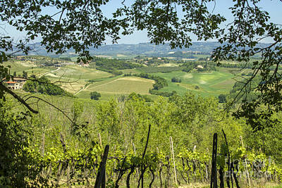 Vineyards In Tuscany Landscape Print by Patricia Hofmeester