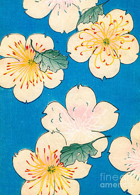 Vintage Japanese Illustration Of Dogwood Blossoms Print by Japanese School