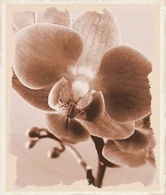 Photograph - Vintage Orchid by Patricia Urato