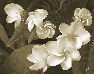 Vintage Plumeria Print by Ben and Raisa Gertsberg