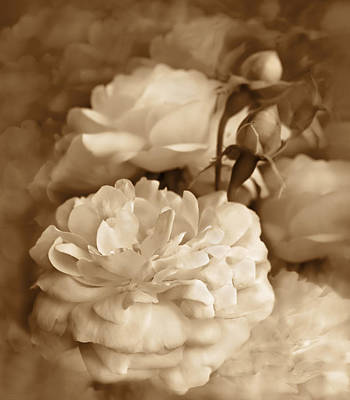 Ivory Rose Photograph - Vintage Roses Bouquet In Sepia by Jennie Marie Schell