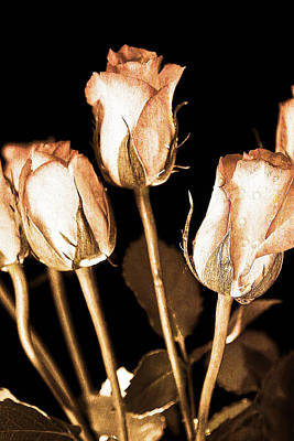 Background And Textures Photograph - Vintage Roses by Tom Gowanlock