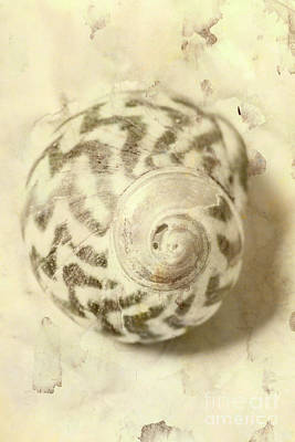 Stain Photograph - Vintage Seashell Still Life by Jorgo Photography - Wall Art Gallery