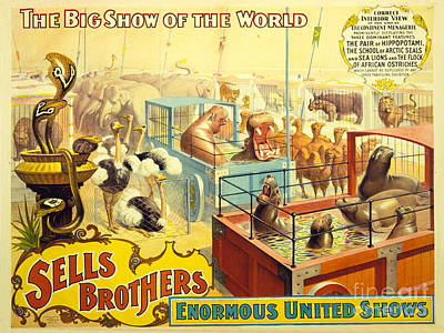 Ostrich Drawing - Vintage Sells Brothers' Circus Poster 2-6  by MMG Archives
