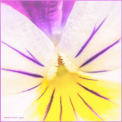 Viola Tricolore Soft Sorbet Print by Mona Stut