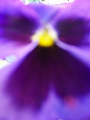 Violet Aura Print by Vijay Sharon Govender