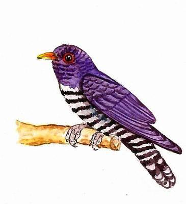 Cuckoo Painting - Violet Cuckoo by Ketki Fadnis