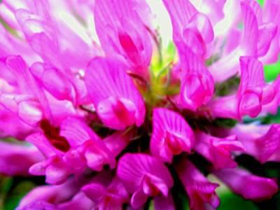 Grow Digital Art - Violet by Molly McPherson