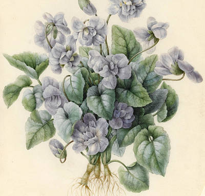 Violets  Print by Aline Corbin
