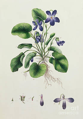 Pages Of Life Painting - Violets by English School