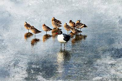 Dowitcher Painting - Vive La Difference by Barbara Chichester