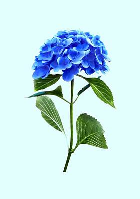 Hydrangea Photograph - Vivid Blue Hydrangea by Susan Savad