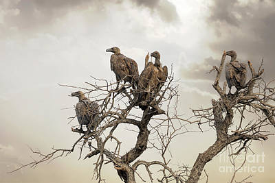 Vultures In A Dead Tree.  Print by Jane Rix