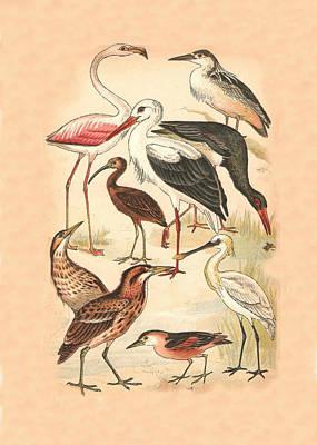Stork Mixed Media - Waders by Eric Kempson
