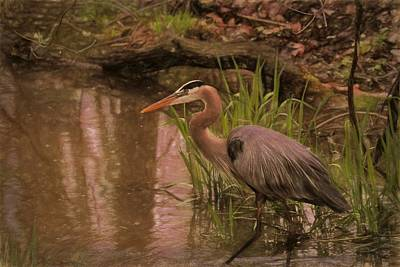 D Wade Mixed Media - Wading Blue Heron by Dan Sproul