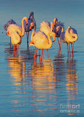 Marching Photograph - Wading Flamingos by Inge Johnsson