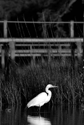 Wading Heron Print by Tom Rickborn