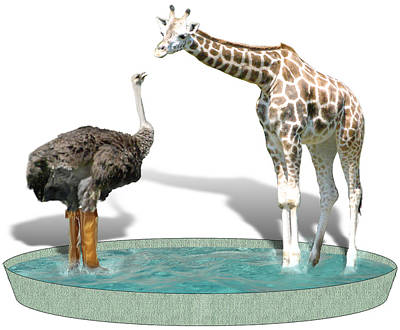 Ostrich Mixed Media - Wading Pool by Gravityx9  Designs