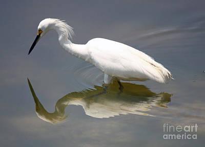 Egret Photograph - Wading Snowy Egret by Carol Groenen