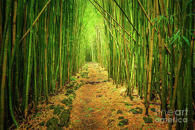Waimoku Bamboo Forest Print by Inge Johnsson
